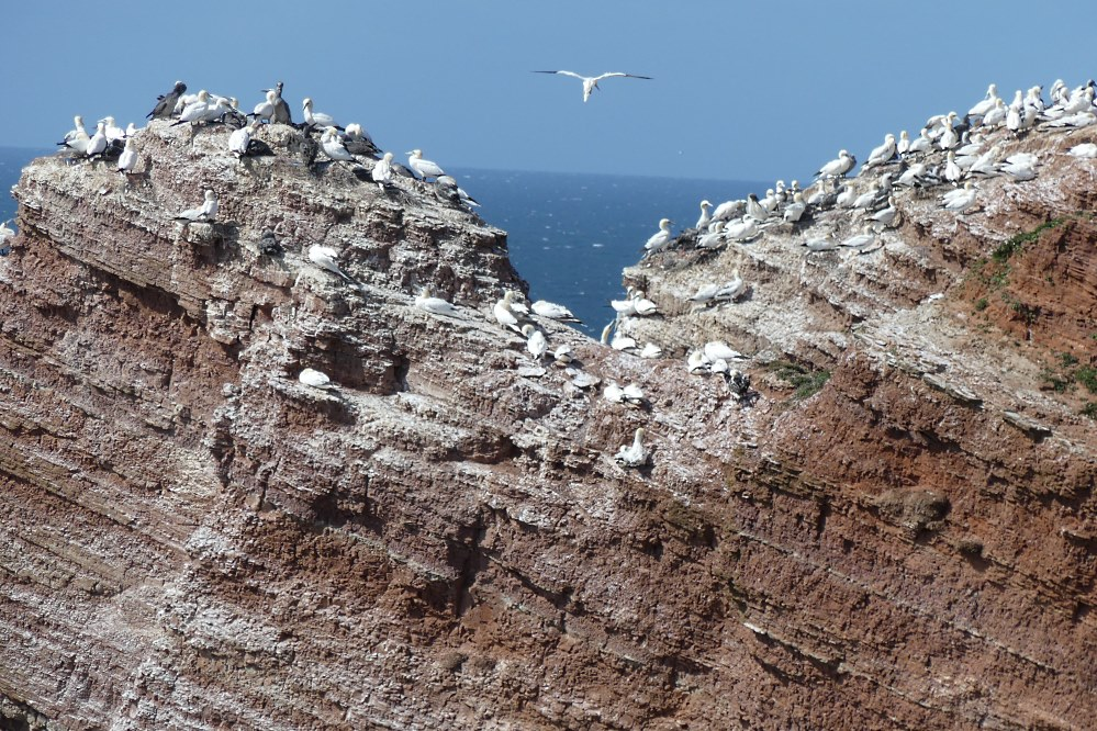 helgoland_galerie13